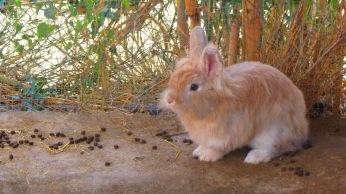 Los animales de la Granja Escuela de Lucainena, Los Baños