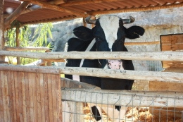 Los animales de la Granja Escuela de Lucainena, Los BañosLos animales de la Granja Escuela de Lucainena, Los Baños