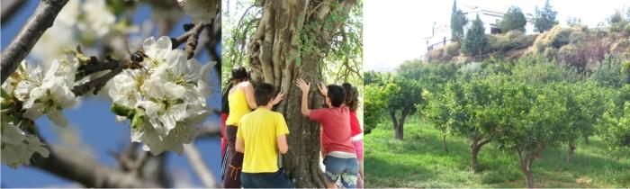 Reforestación, Granja Escuela de Lucainena, Los Baños